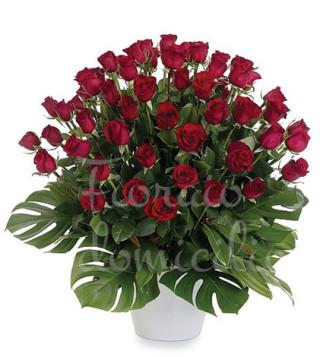 Fiori a domicilio: 50 rose rosse