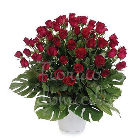 Popolare 50 Rose rosse medium: Consegna a domicilio RM13