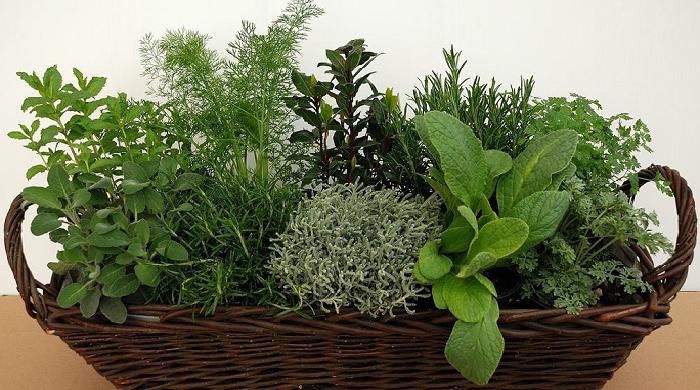 Basilico salvia e rosmarino come curare le piante aromatiche sul balcone di casa fiori a - Erbe aromatiche in casa ...