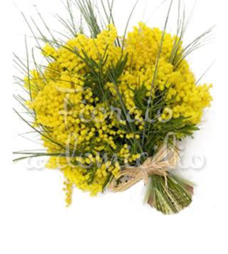 fascio-mimose