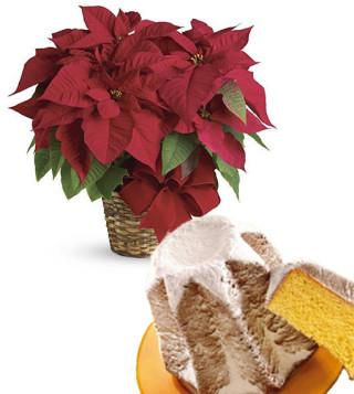 Fiori a domicilio |Stella di Natale con Pandoro
