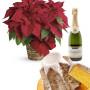 Fiori a domicilio |Stella di Natale con Pandoro e Champagne
