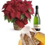 Fiori a domicilio |Stella di Natale con Pandoro e Spumante