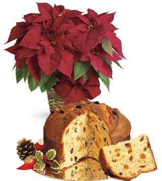Fiori a domicilio |Stella di Natale con Panettone