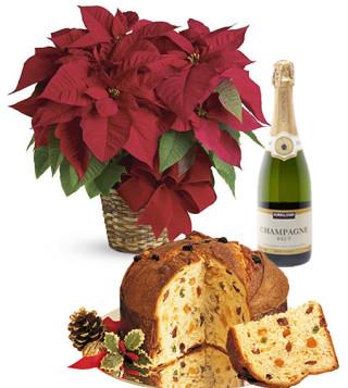 Fiori a domicilio | Stella di natale con panettone e champagne